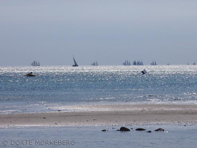 Billedet er taget fra Bøgebjerg stran den dag sejladsen fra Kerteminde med de bevaringsværdige træskibe startede