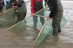 Ved natur & Kulturformidlingscentret Myrthuegård kan man prøve kræfter med rejefangst i vadehavet.