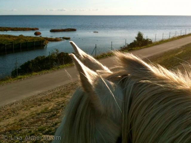 Billedet er taget på Amager fælled ude på den nybyggede vold med udsigt over Øresund på heste ryg. Hesten Zeus der nyder det gode efterårsvejr lige så meget som jeg. Amager fælled, september 2012.