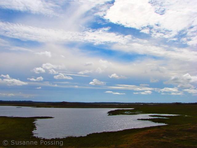 Set fra Tved Klitplantage, øst for Blegesø
