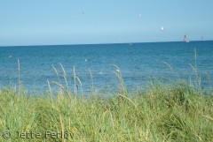 Sommer ved Kattegat