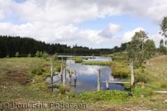 Naturgenopretning og genetablering af de gamle søer i Gribskov