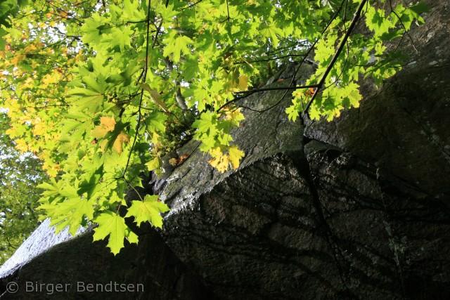 Et billede fra en smuk efterårsdag i Ekkodalen. Dejligt lys.  Birger Bendtsen bjbendtsen@gmail.com
