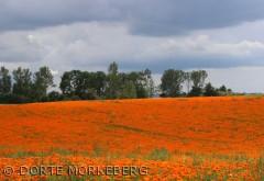 Billedet er taget et sted op mod Nordfyn fra Messinge . den  19 juli 2012. Man blev bare indhyllet i farverne