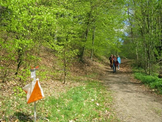 Orienteringsløb i Dollerup Bakker på Skovens Dag.