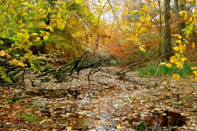 Efterår i Tybrind Skoven ved Middelfart.
