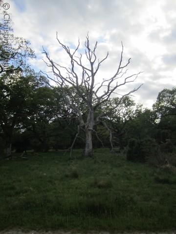 Levende og dødt står side om side i Naturskoven Tofte Skov ved Lille Vildmose