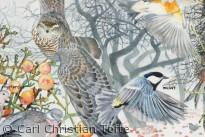 Fugleplakat - udsnit