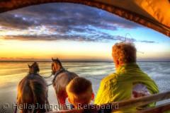 Vi var på solnedgangs tur med Mandøevent, Benny Thomsen fortalte levende om naturen og vadehavet