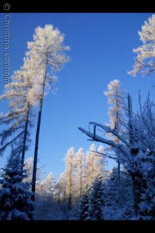 Sidste vinter gik jeg en tur i skoven. Det var en af de dage hvor det hele bare var perfekt - natten forinden havde det sneet, og hen af formiddagen da solen stod højt, lignede det hele noget taget ud fra et eventyr.