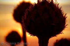 Flue i silhuet på blomst i Hedeland...
