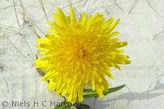 Blomster er smukke også dem der gror i sand.,