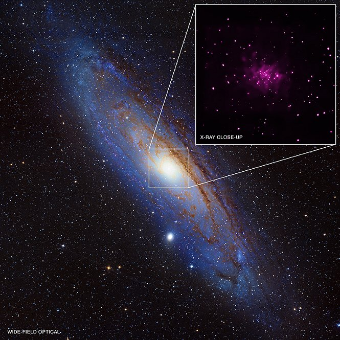 Black hole candidates in the Andromeda Galaxy