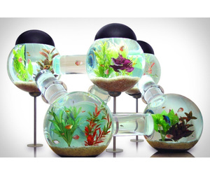 Aquarium small