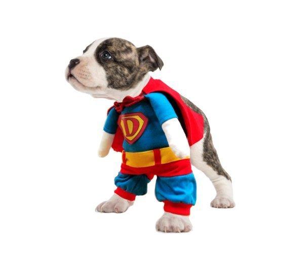 Superhund medium