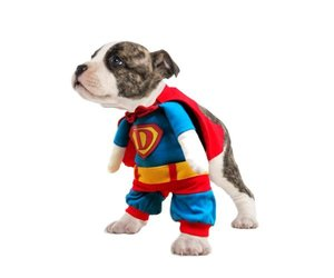 Superhund small