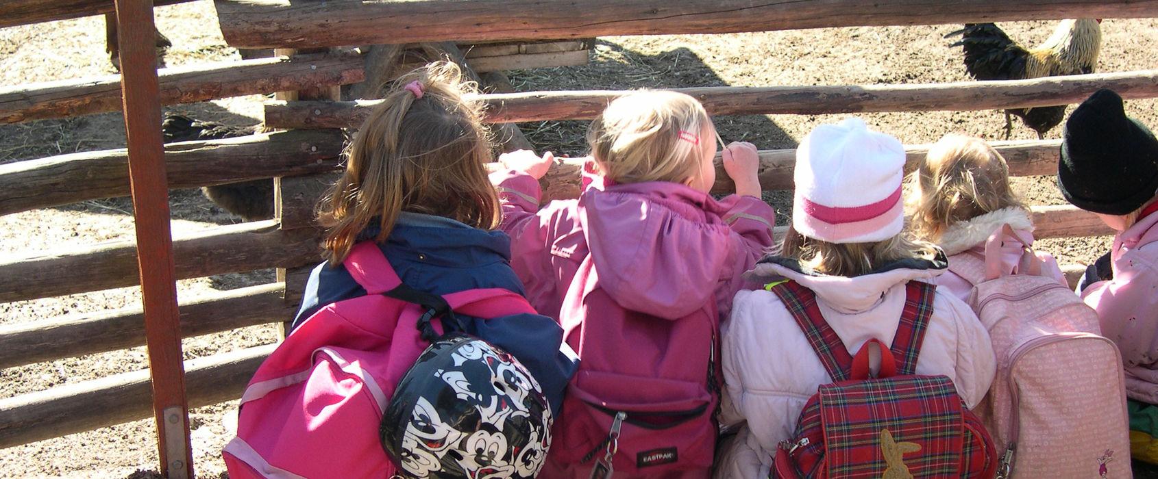Barn och djur på Skansen