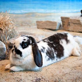 Kanin på Lill-Skansen