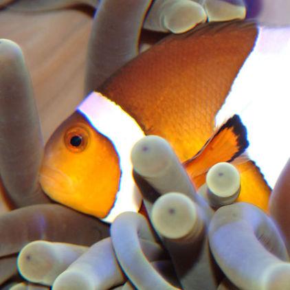 Fisk på Skansen-Akvariet