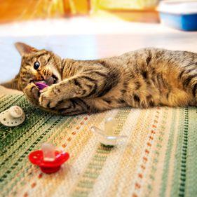 Katt på Lill-Skansen