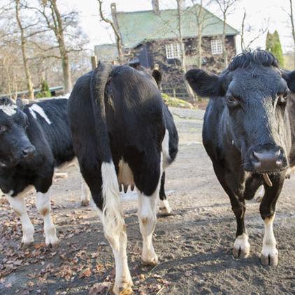 Kor på Skansen