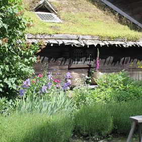 Kyrkhultsstugans örtagård på Skansen