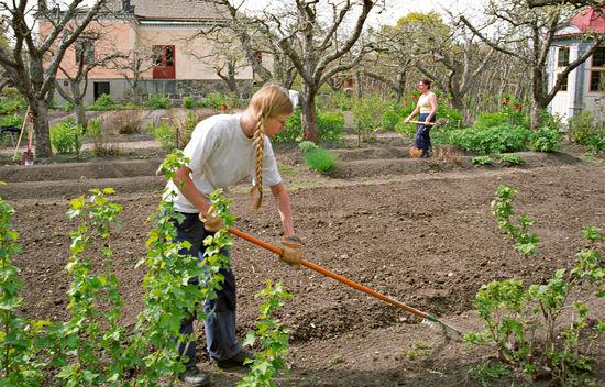Vårförberedelse i Skogaholms trädgård.