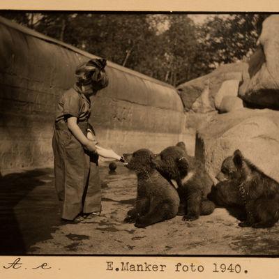 Småbjörnar Från Lappland