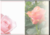 rosefll card