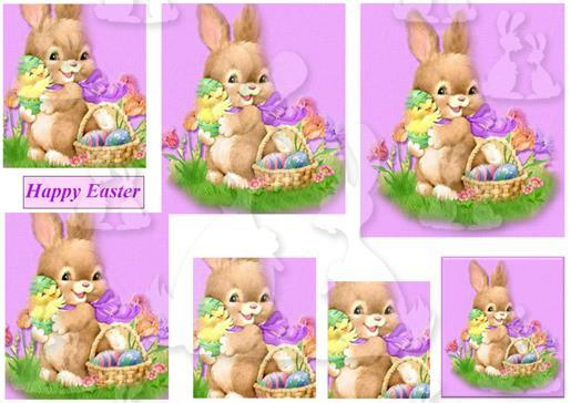 cute bunny   plc