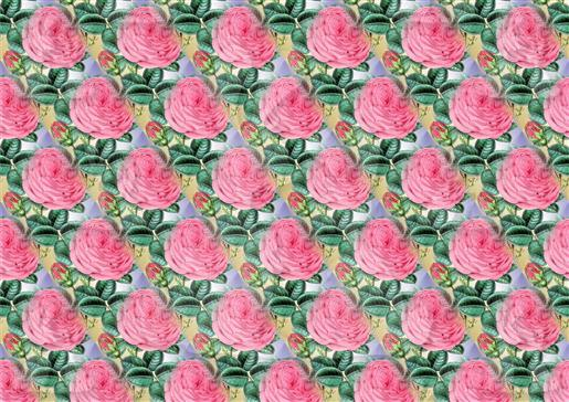 Pink Roses Background-DWJ