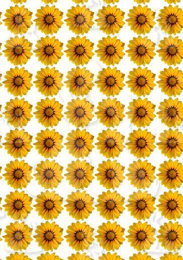 sunflower florals