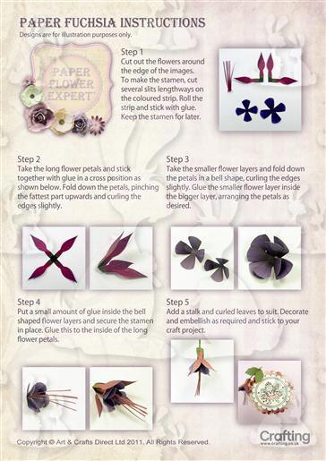 Fuchsia Instruction Sheet