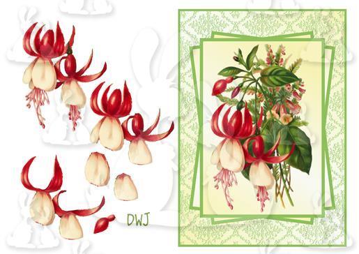 fuchsia decoupage cardfront dwj