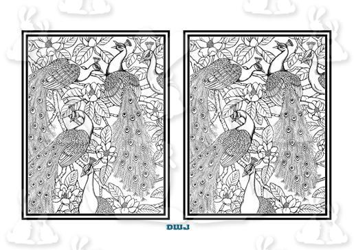 Peacock Colouring Page-DWJ