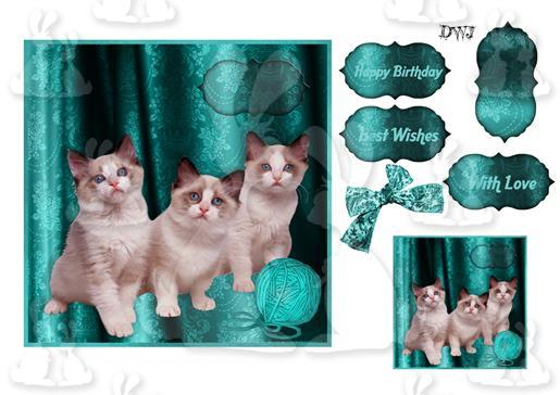 Kittens Any Occasion-dwj