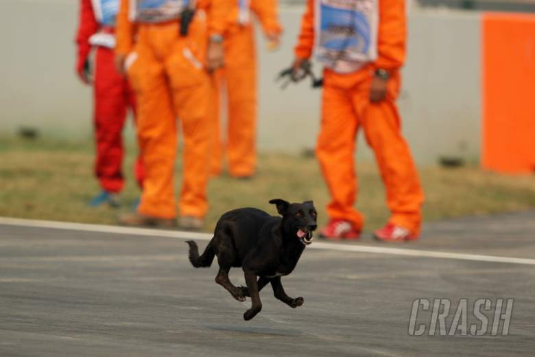 Stray dog on race track