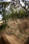 Pow  Bmx  Trails Redding Pow Trls Riding 03