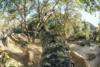 Socal Trails Dig Bmx Aw 13
