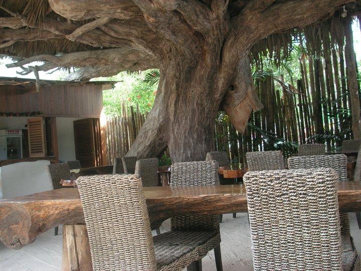 Albero di takamaka che fa da tetto al ristorante!