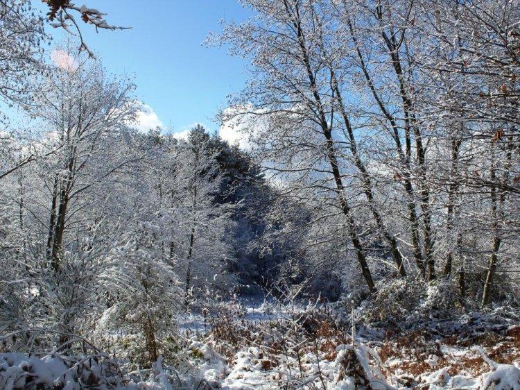 CALABRIA_Il bosco dopo la nevicata notturna_monte Reventino