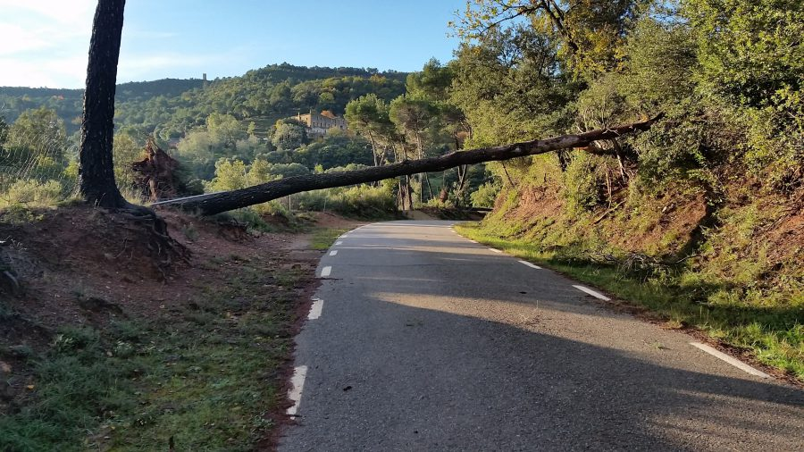 Els Bombers també van retirar arbres que van caure a la carretera