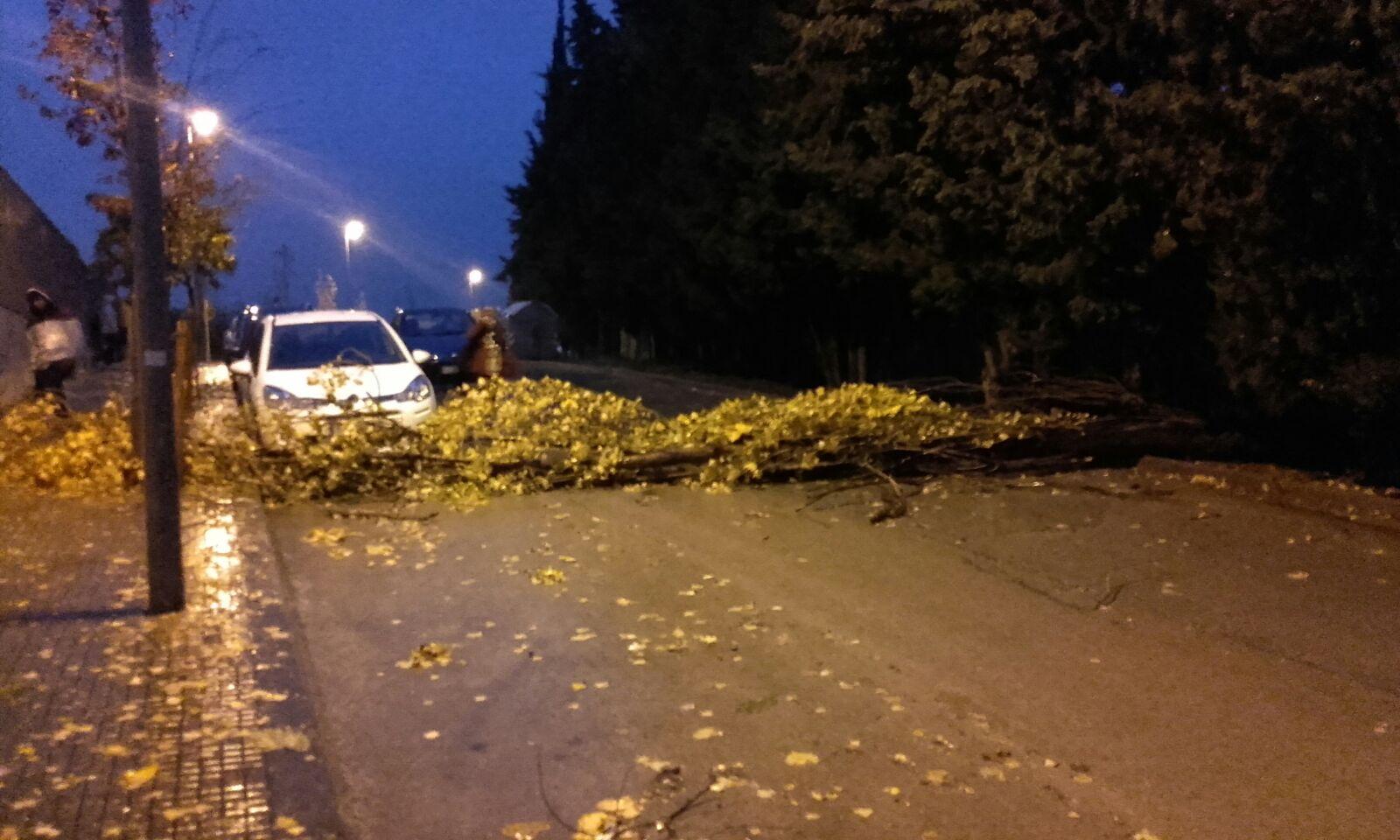El temporal ha fet caure un arbre al carrer Puig de les Forques