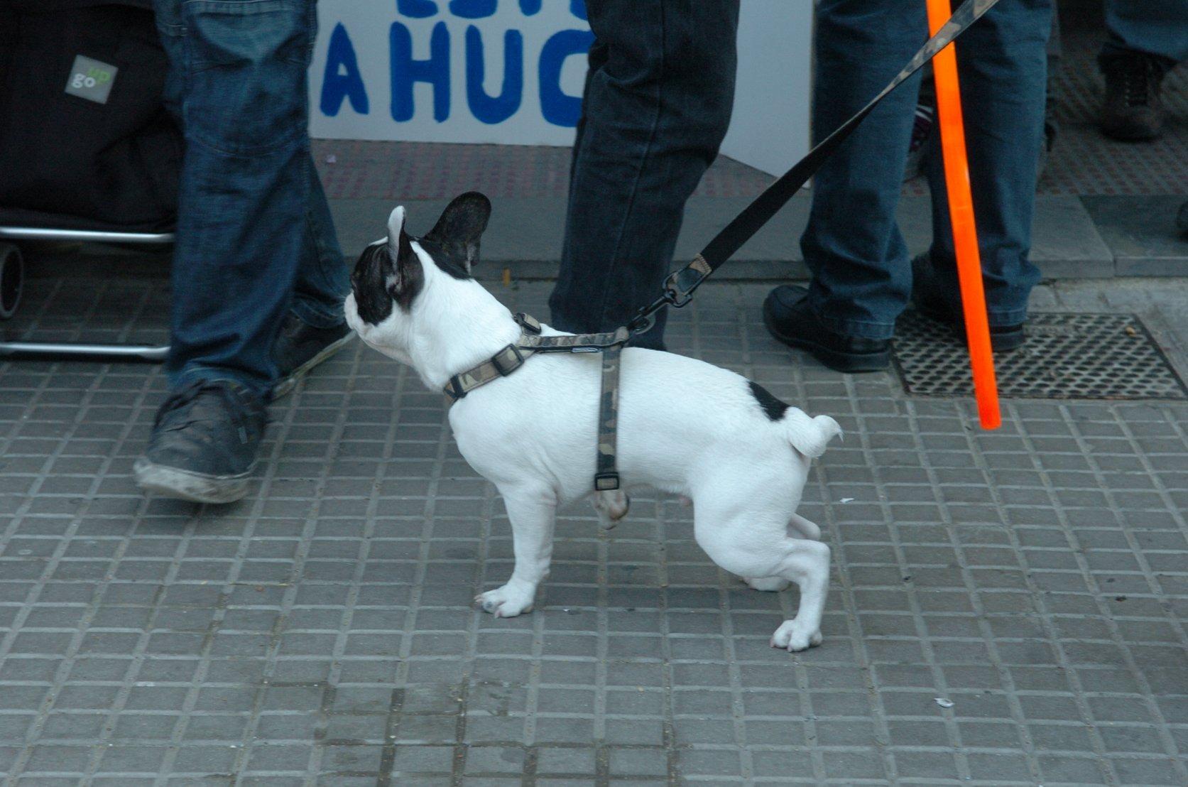 Cardedeu vol incrementar el nombre d'animals amb xip