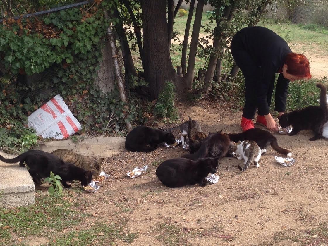 Una colònia de gats en una imatge d'arxiu