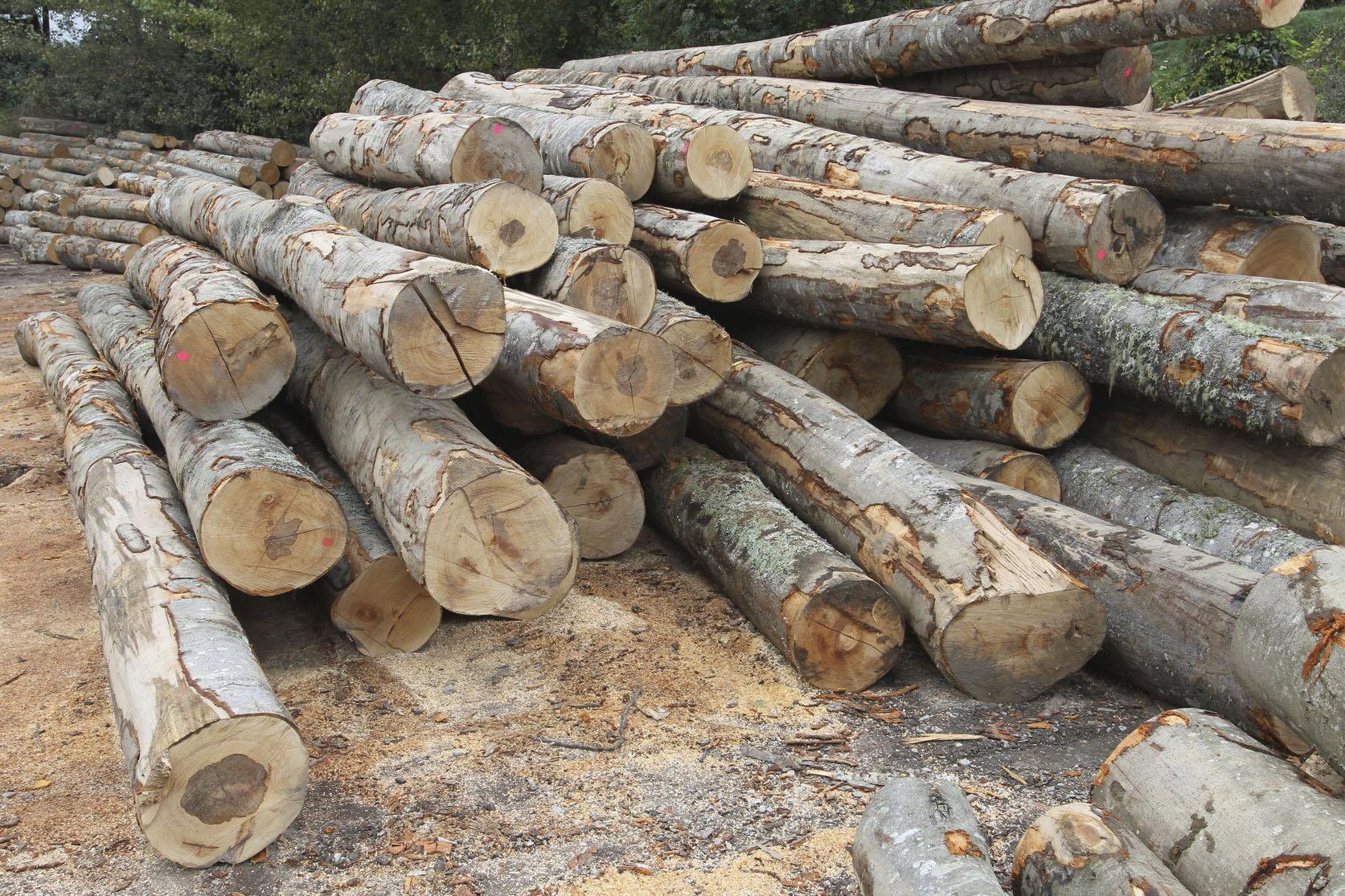 L'objectiu que es marca el govern és promoure la demanda i l'aprofitament de fusta i la gestió dels boscos amb criteris de sostenibilitat