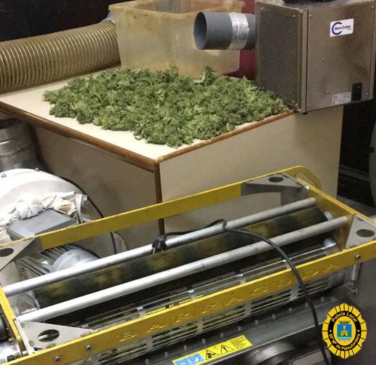 Restes de marihuana en una foto d'arxiu