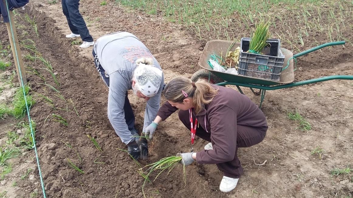L'Associació Sant Tomàs, nou soci del projecte de voluntariat destinat a produir aliments pel Sarró