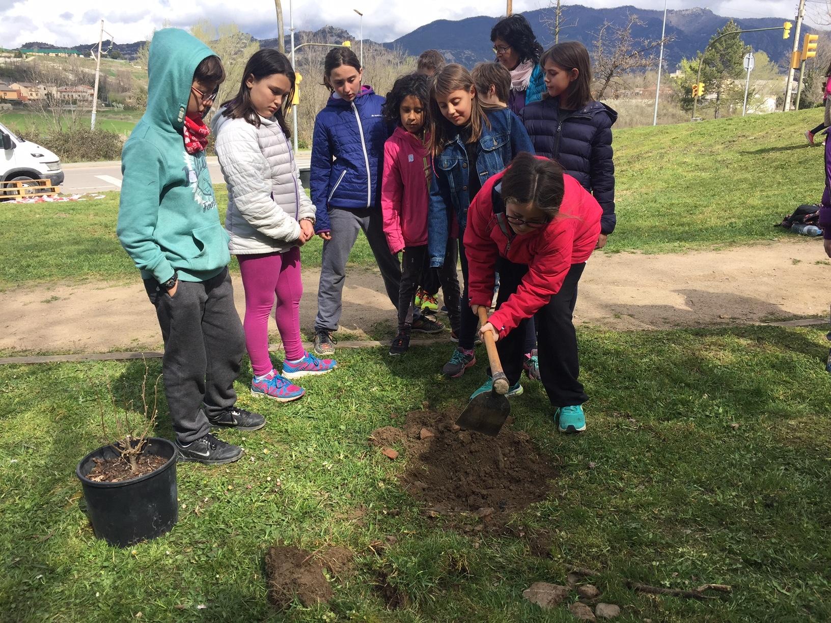 Primera plantada d'arbres i arbusts