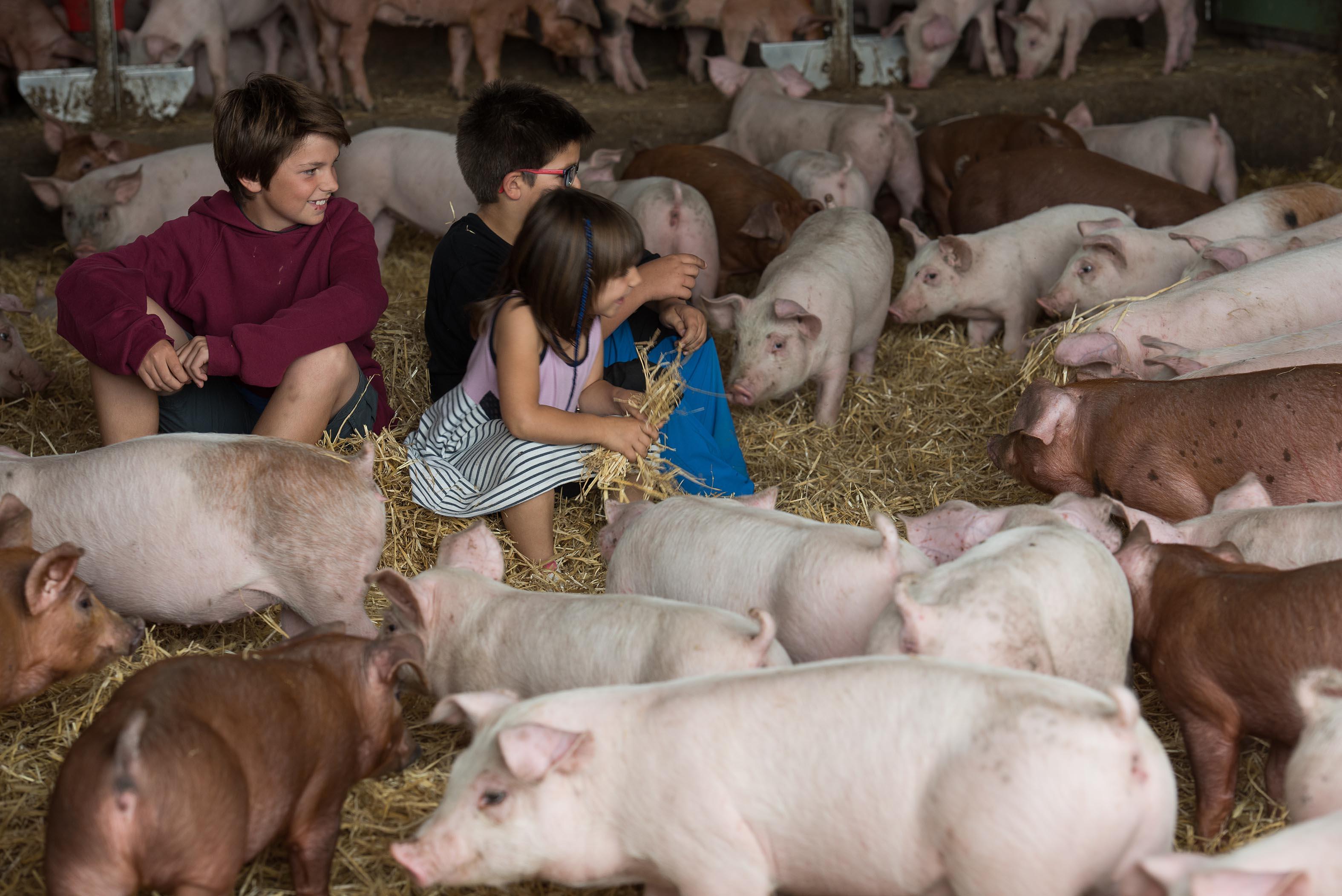 Tres infants, durant la visita a una granja de porcs